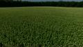 北海道産蕎麦の花は満開! 16687753