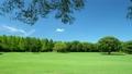 広い芝生の公園でゆれる葉 16773394