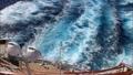 タスマン海 16917796