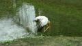 นกกระสาขู่ 16920527