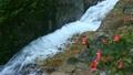6月初夏 屋久島の白谷雲水峡 17024679