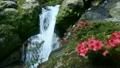 6月初夏 屋久島の白谷雲水峡 17024680