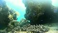热带鱼珊瑚固定在菲律宾 17118920
