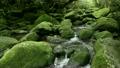 6月初夏 屋久島の白谷雲水峡 17127967