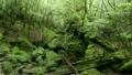 6月初夏 屋久島の白谷雲水峡 17127970