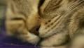 สัตว์,สัตว์ต่างๆ,ลูกแมว 17189211