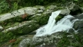 6月初夏 屋久島の白谷雲水峡 17385535