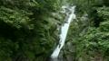 6月初夏 屋久島の白谷雲水峡 飛流おとしの滝 17385536