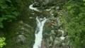 6月初夏 屋久島の白谷雲水峡 17385537
