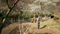 Motion Control Time Lapse of Japanese Plum Trees -Tilt Up/Pan Right- -Zoom In 17465430