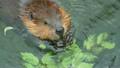 Beaver 17494256