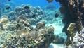 ปะการัง,ปลาเขตร้อน,ปลา 17551016