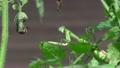 カマキリの視線 17628130