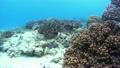 浮潜下的热带鱼和珊瑚礁水下摄影运动摄影 17651577