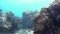 浮潜下的热带鱼和珊瑚礁水下摄影运动摄影 17651579