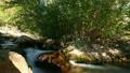慢速 景色 自然 18196242