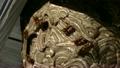 スズメバチの巣造り 18402929