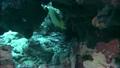 tropical, fish, aquatic 18656628