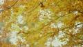 단풍 10 18666081