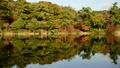 神戸の紅葉(もみじ)再度山は大龍寺、再度山公園、猩々池(しょうじょういけ) 18784432