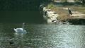 鳥兒在水邊 19229016