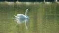 水鳥休息 19262671