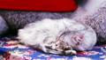 猫 猫咪 宠物 19265085