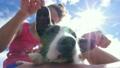 わんこ 犬 ペットの動画 19515866