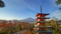 일본, 경치, 풍경 19544685