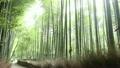 竹林の道 竹林の小路 竹林の動画 19581833