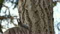 エゾリス リス 小動物の動画 19844905