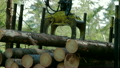 Feller Buncher loads tree trunks in forest 20051173