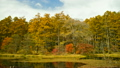 戸隠高原ミドリ池と黄葉したカラマツ 20428022
