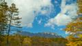 戸隠高原戸隠山と黄葉したカラマツと流れる雲 20428025