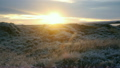 Iceland sunset with reeds and grass blowing in win 20508315