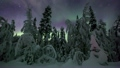 Northern lights in Finland forest Lapland 20527007