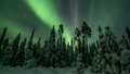 Northern lights in Finland forest Lapland 20527019