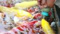 鯉魚 饋送 魚 20576185