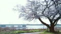 桜と電車 20586497