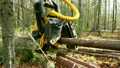 View of logger cuts down tree and its branches 20699425