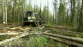 Forestry. View of logger moves through woods 20699435