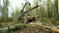 Modern logger loading timber using mechanical grip 20699444
