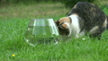 Nice cat catch fish from plastic bowl with water a 20916557