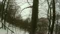 冬天 冬 木頭 20986791