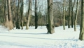ウォーキング 歩く 歩行の動画 21108301