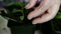 Seedlings on the vegetable tray. 21225323