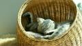 动物 猫 猫咪 21301913