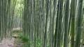 竹林の小路 21319498