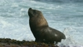 Patagonia sea lion seals on the beach 21328219