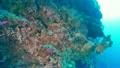 セブ・バリカサグの水中景観 21432090